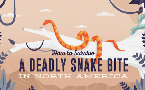 the complete snake guide