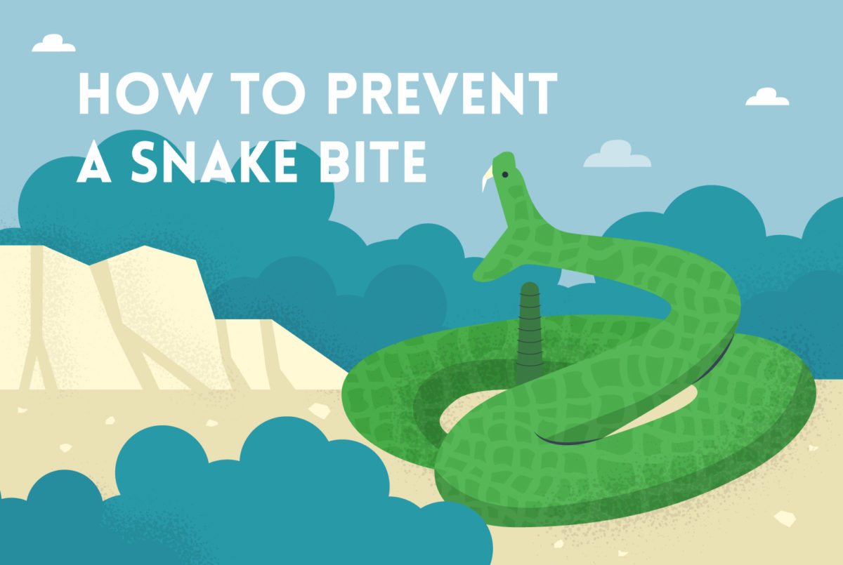 A guide on preventing snake bites