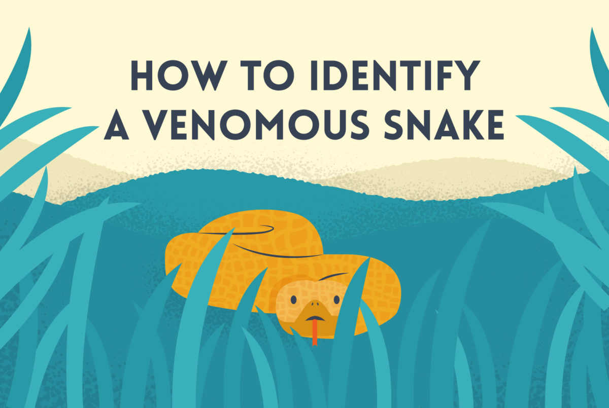 Guide for identifying North American venomous snakes