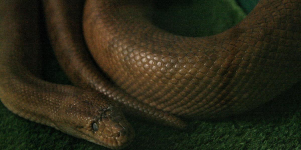 Snake Terrarium